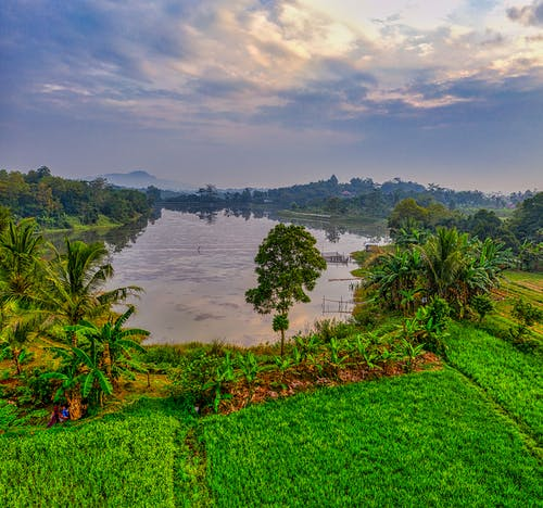 Picturesque scenery of river near plantations on field near green trees and plants with hill on background under cloudy sky in summer evening
