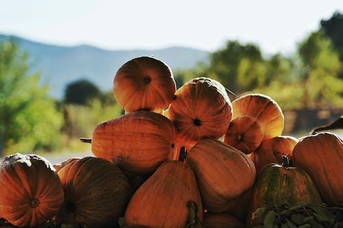 Ingyenes stockfotó aratás, csendélet, csoport témában