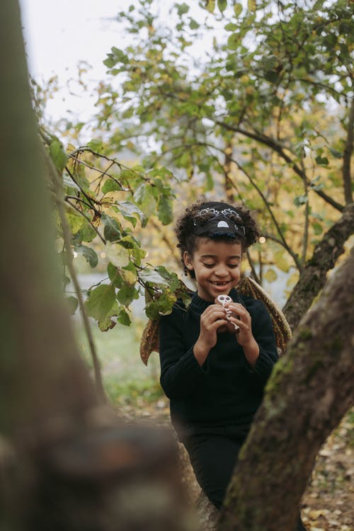 Photos gratuites de amusement, apeuré, arbre, atmosfera de outono