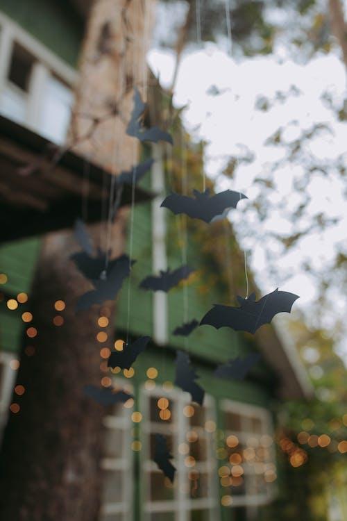 Black Bat Decoration Hanging on A Tree