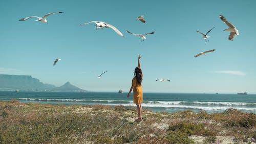 açık hava, boş zaman, deniz, deniz kenarı içeren Ücretsiz stok fotoğraf