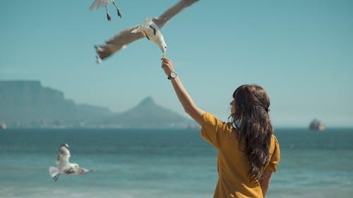 açık hava, Aşk, boş zaman, deniz içeren Ücretsiz stok fotoğraf