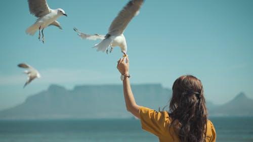 açık hava, boş zaman, Cape Town, deniz içeren Ücretsiz stok fotoğraf