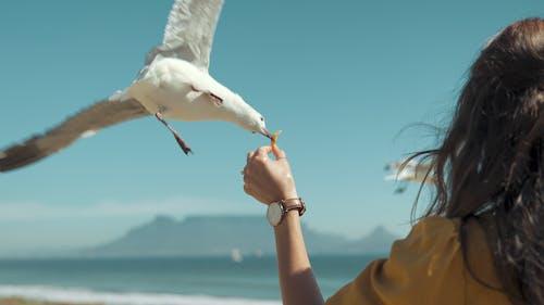 açık hava, boş zaman, deniz, dış mekan içeren Ücretsiz stok fotoğraf