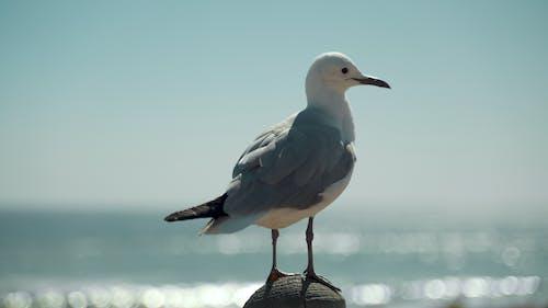 açık hava, deniz, dış mekan, gaga içeren Ücretsiz stok fotoğraf