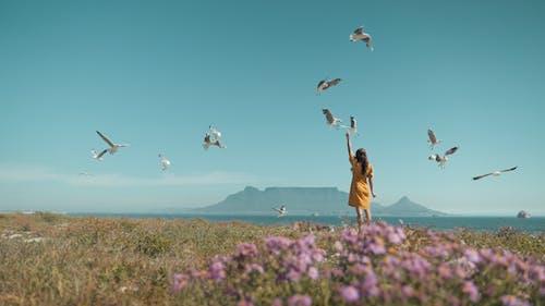 açık hava, Cape Town, çiçek, deniz içeren Ücretsiz stok fotoğraf
