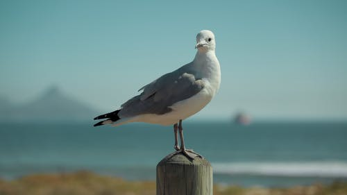 açık hava, deniz, deniz kenarı, deniz kıyısı içeren Ücretsiz stok fotoğraf