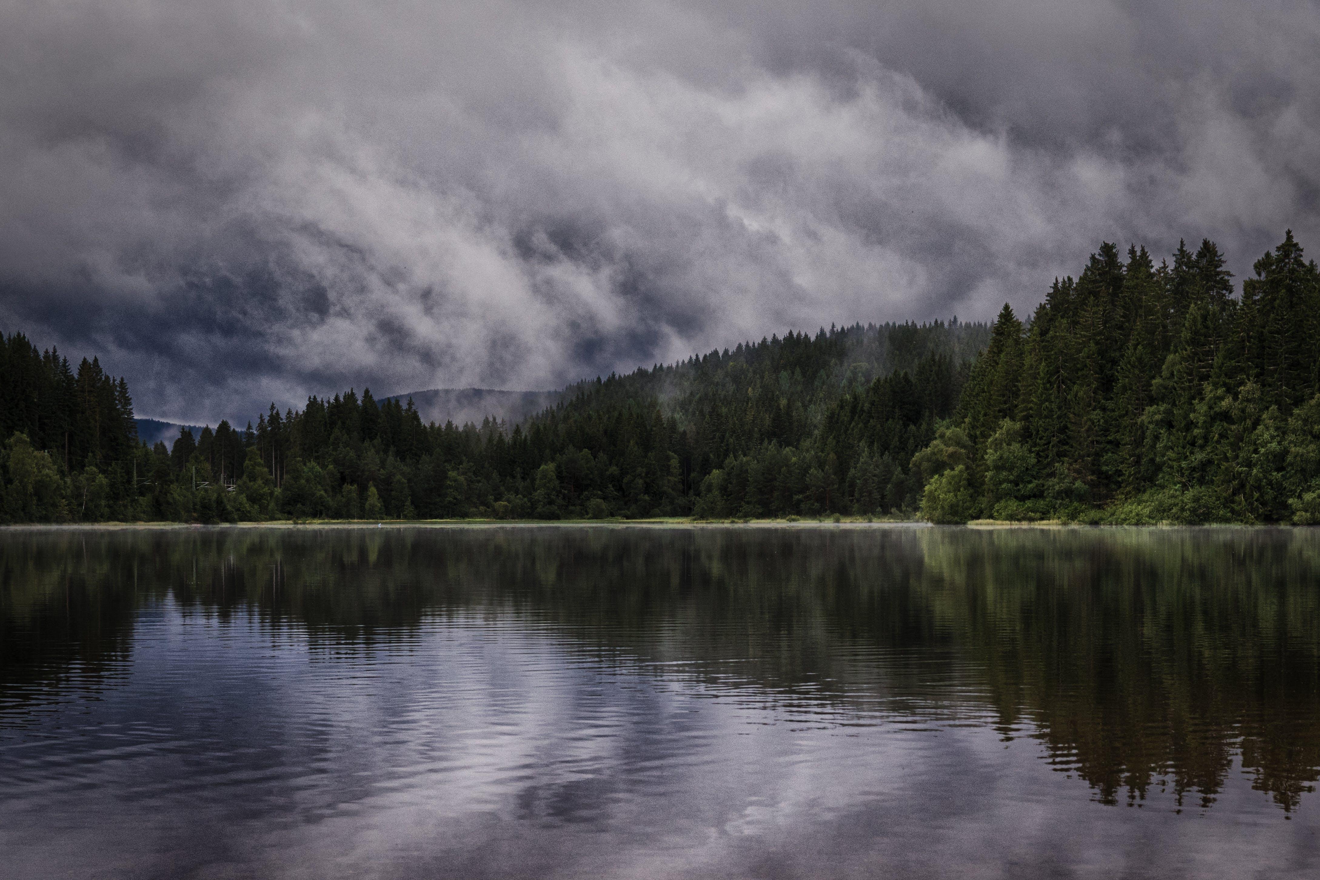clouds, conifers, fir trees