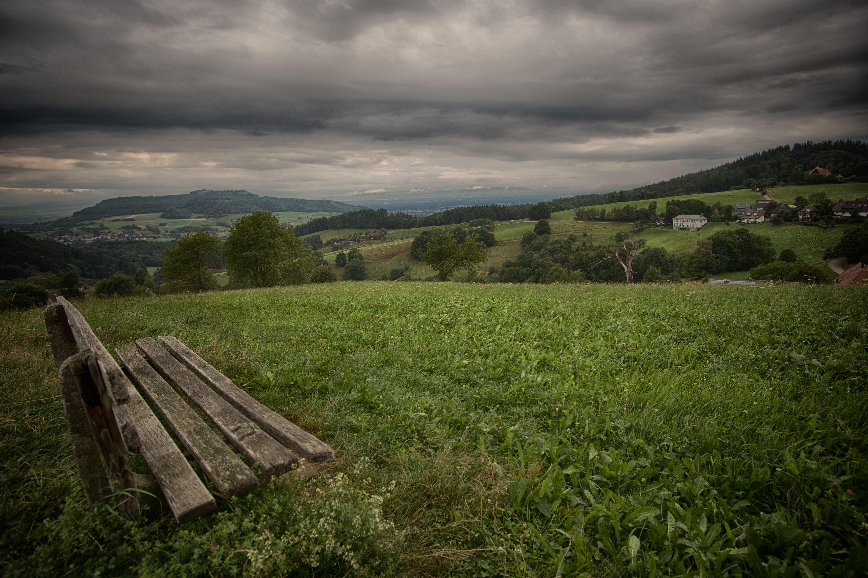 Foto d'estoc gratuïta de arbres, banc, bosc, boscos