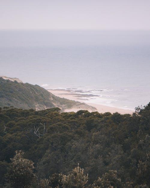 Green Trees on Mountain Near Sea