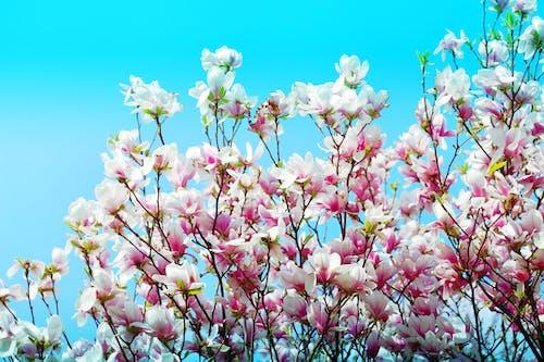 Darmowe zdjęcie z galerii z błękitne niebo, flora, gałęzie, kolory