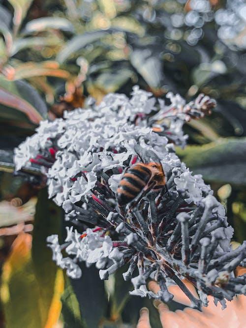Бесплатное стоковое фото с аромат, Биология, благоухающий