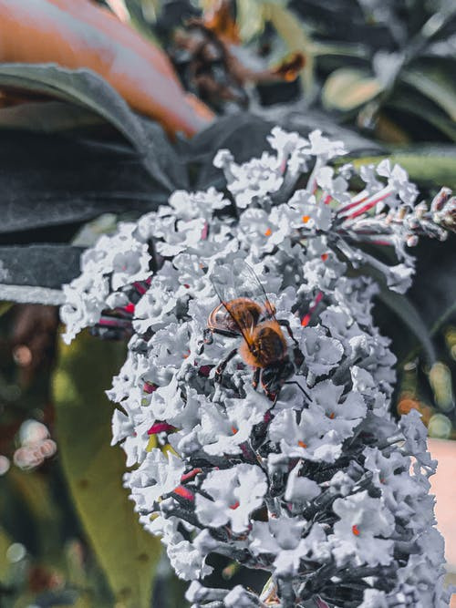 From above of bee collecting pollen from blooming flowers of Buddleja davidii in nature