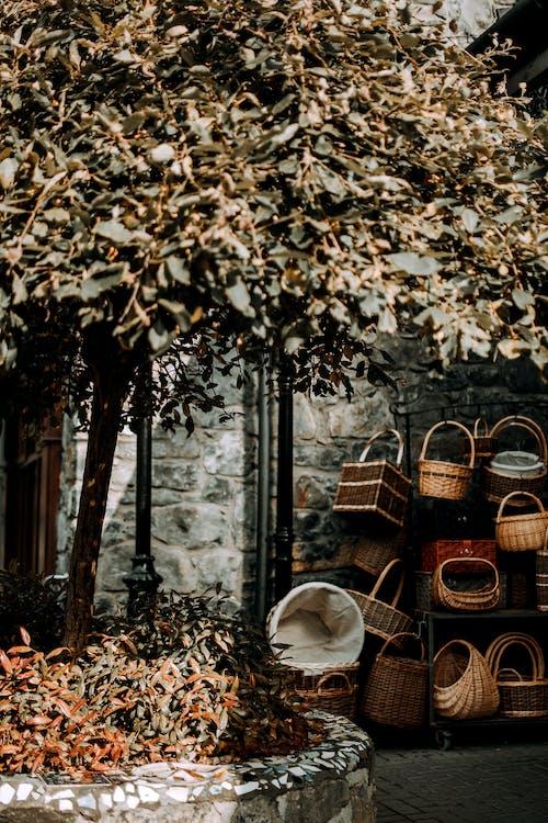下落, 傳統, 別緻, 博霍 的 免费素材图片