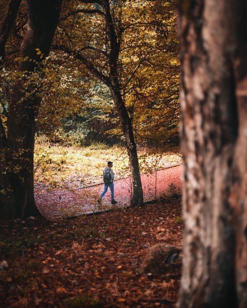 Man Walking On Paved Pathway In The Woods