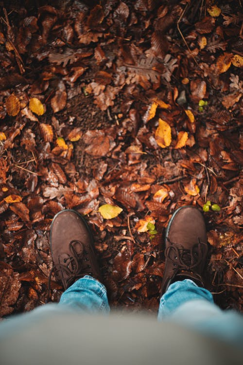 Person in Blue Denim Jeans and Brown Leather Shoes Standing on Dried Leaves