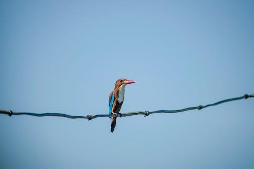 Free stock photo of bird, bird eye, kingfisher