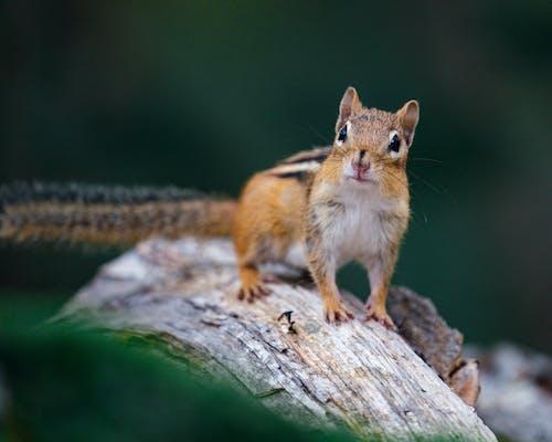 Fotos de stock gratuitas de adorable, animal, árbol