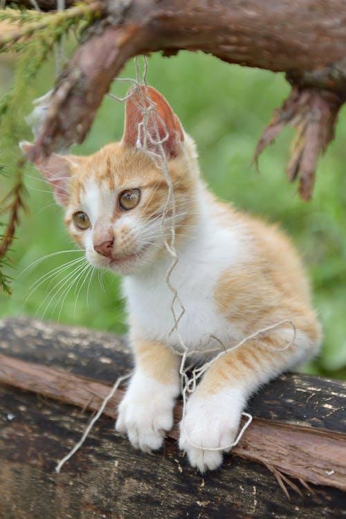 Immagine gratuita di alla ricerca, animale, animale domestico, baffo