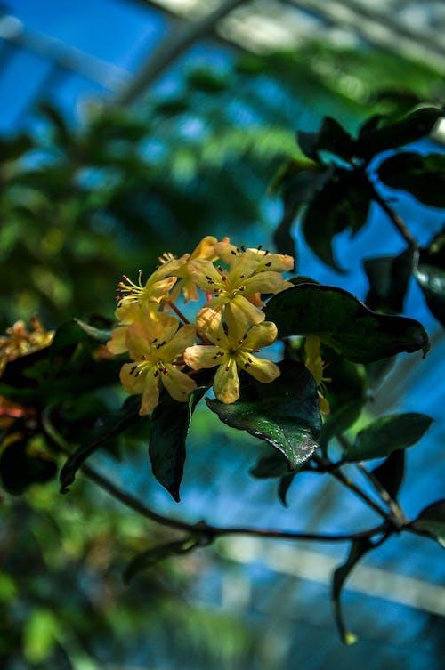 Free stock photo of botanical garden, flower, flowers, garden