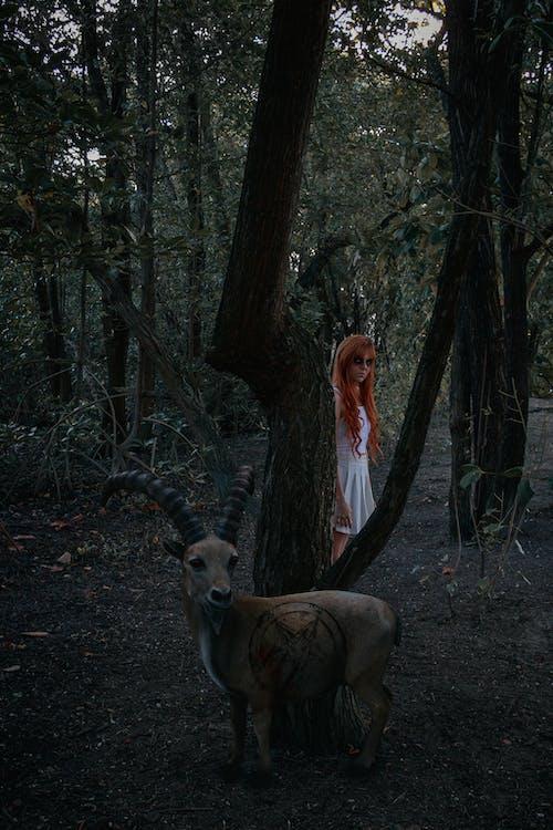 Free stock photo of dark, goat, halloween, photoshoot