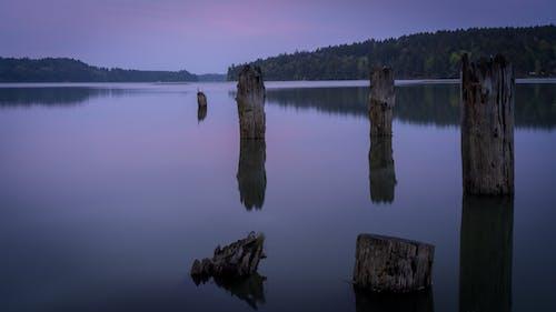 Tree Logs on Lake