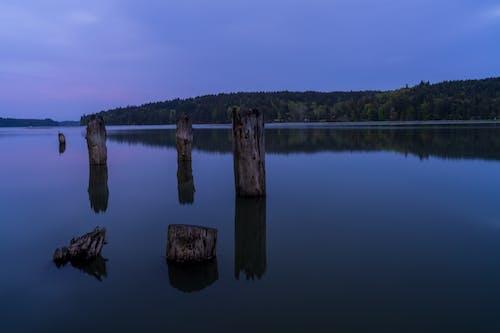 Brown Logs on River Under Blue Sky