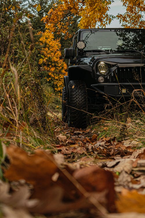 Black Jeep Wrangler on Brown Dried Leaves