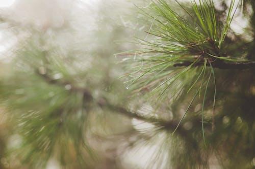 Ingyenes stockfotó ág, évszak, fa, fényes témában