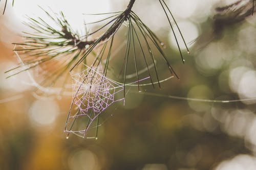 Spider Web on Brown Plant
