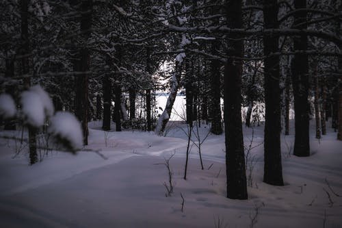 Tall trees with branches  covered with hoarfrost growing in woods on snowy terrain in winter time in nature outside