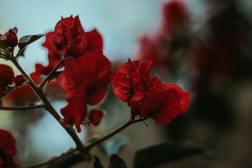 Gratis stockfoto met blad, bladeren, bloeiende plant