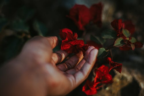 Red Flower on Persons Hand