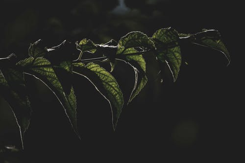 Leaves of tree in dark forest