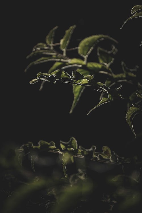 Green lush plant branches in darkness