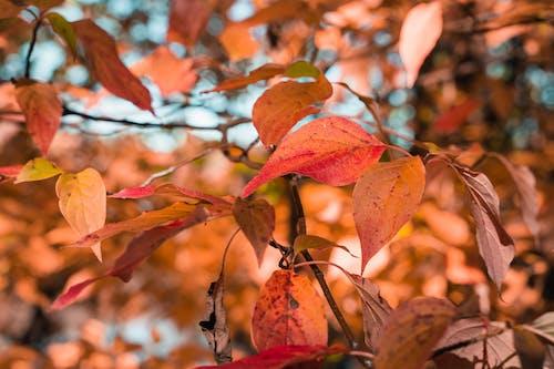 Free stock photo of 4k wallpaper, autumn, autumn atmosphere