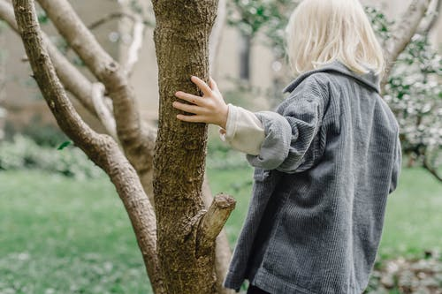 Back view of unrecognizable little boy with blond hair touching tree trunk while standing in park with grassy lawn on blurred background
