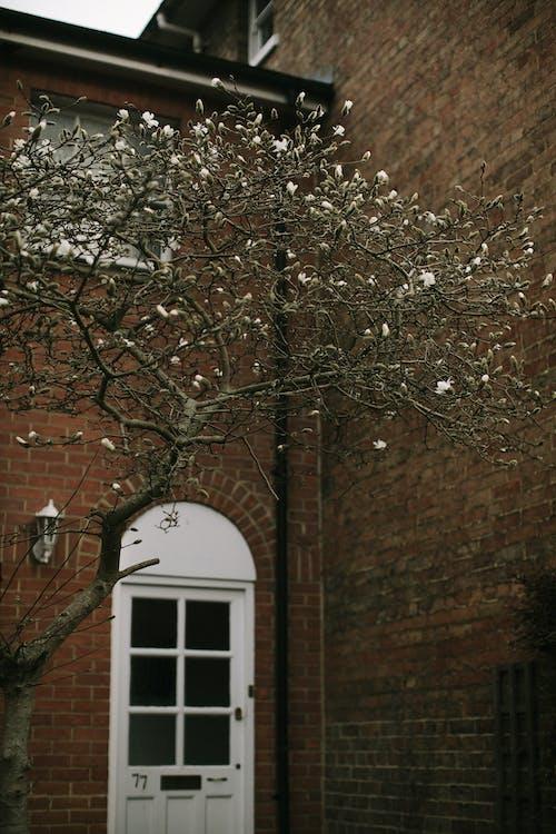 Immagine gratuita di albero, architettura, autunno, cadere