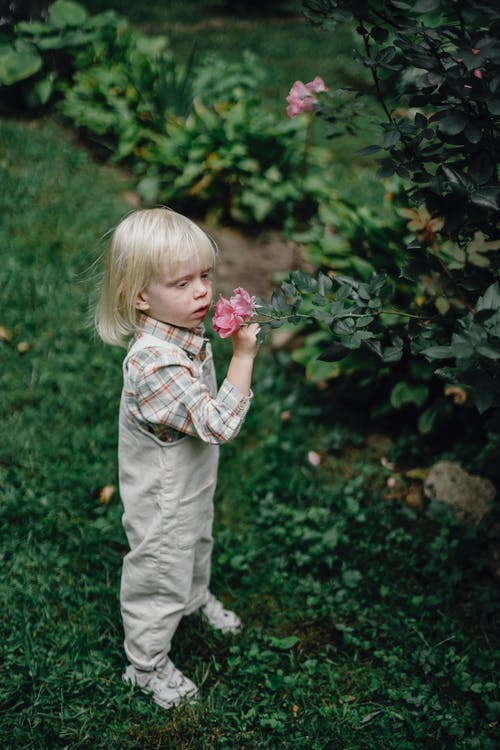 Side view of calm adorable little kid with blond hair in stylish outfit enjoying smell of pink garden rose growing on lush bush in daylight