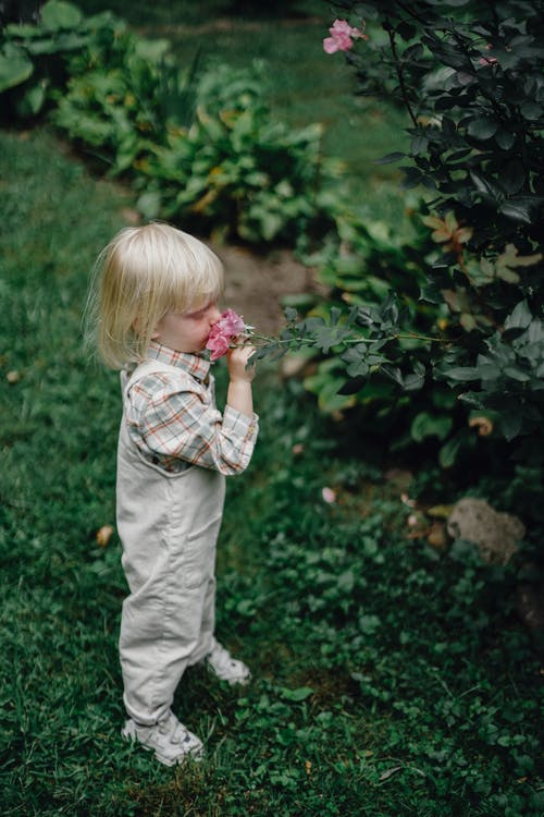 Side view of adorable little child with blond hair in stylish clothes smelling fresh pink rose growing on lush shrub in garden