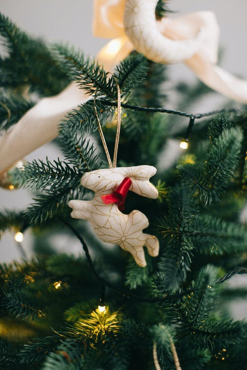 Immagine gratuita di abete, ago, albero, albero di natale