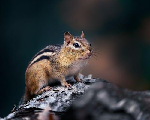 Imagine de stoc gratuită din adorabil, afară, animal