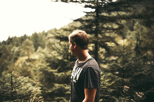 Free stock photo of nature, man, person, forest