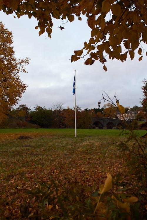 Foto d'estoc gratuïta de arbres, bandera, pal, pal de bandera