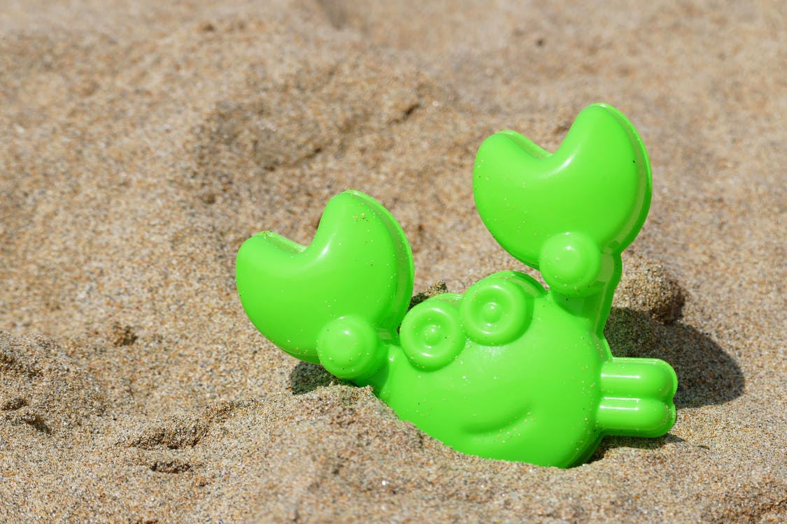 Free stock photo of animal, beach, children