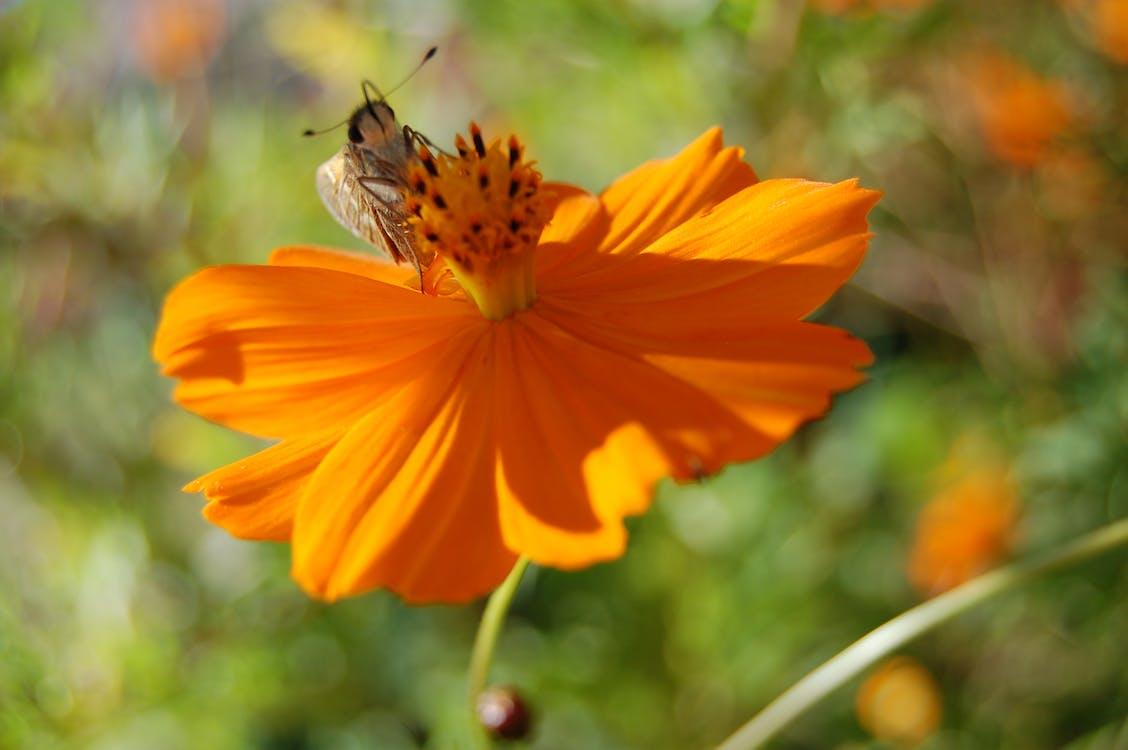 Free stock photo of bee, insect, orange