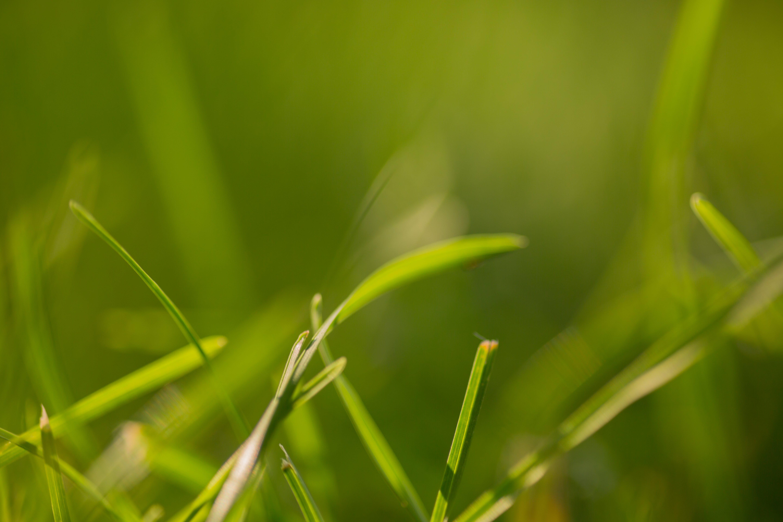 Δωρεάν στοκ φωτογραφιών με crabgrass, γρασίδι, γρασίδι κοντά, θαμπός