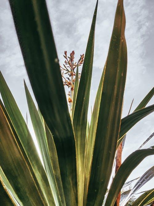 Free stock photo of airy, beautiful nature, botanic garden