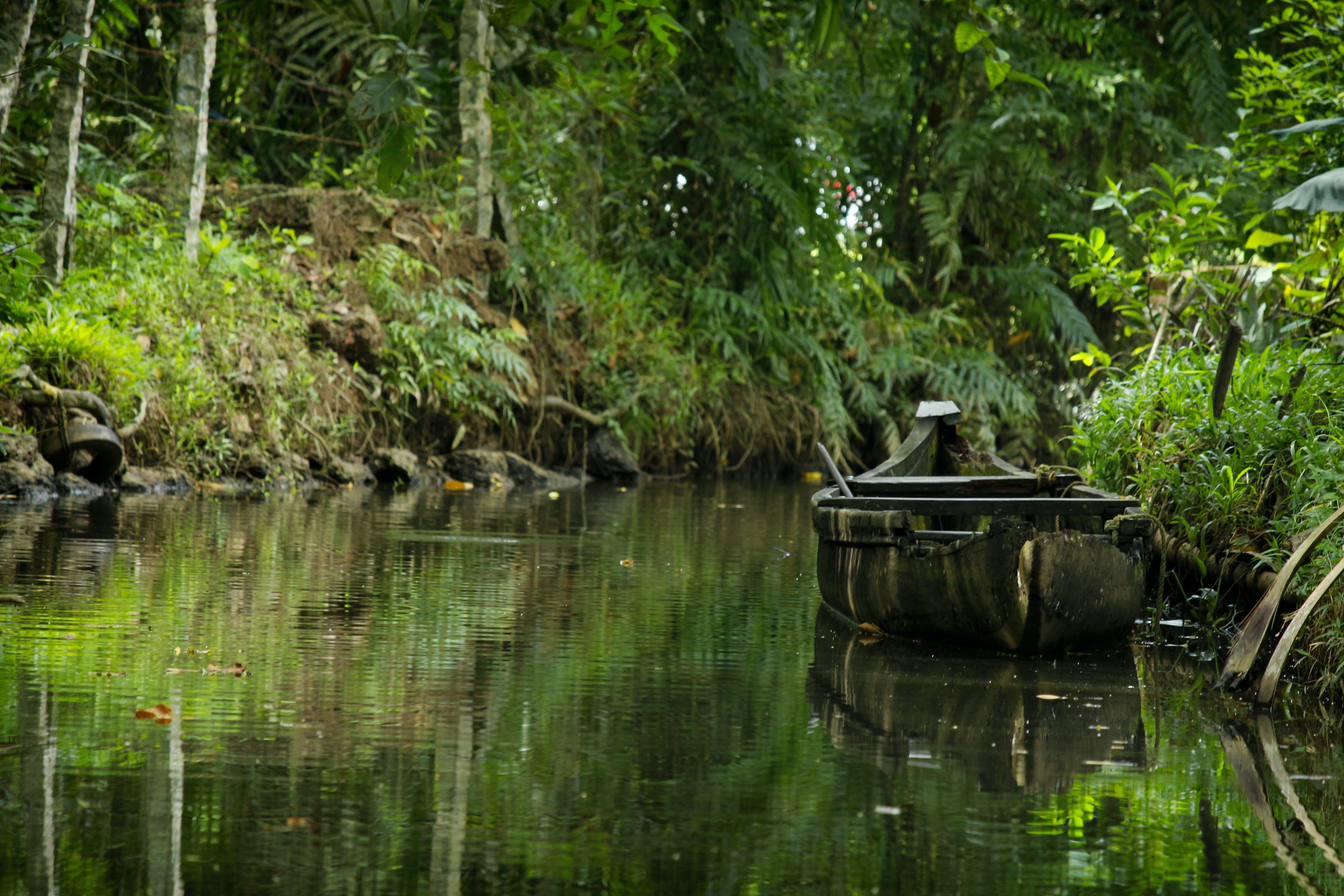 Free stock photo of boat, green, kerala boat, natural