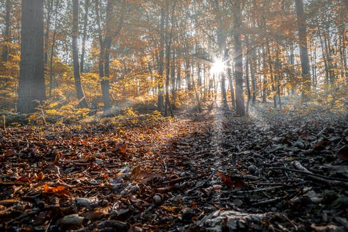 Free stock photo of dunst, Herbst, laub